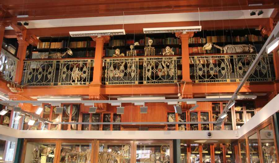 Grant Museum of Zoology and Comparative Anatomy (1)